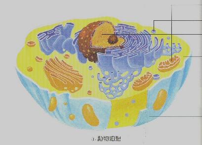 细胞结构图,,细胞结构示意图,专业细胞观察显微镜出售